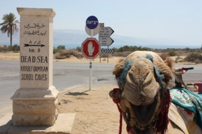 091409_Israel_Dead_Sea_Happy_Camel (c) Deanna Ting