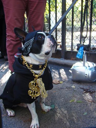 An Israelite dog leaving Egypt. | CC via Flickr user istolethetv