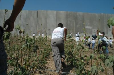 Palestinian children running toward the separation barrier.   CC via Wikimedia commons